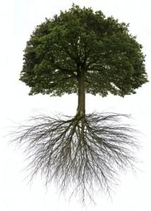 Tai Chi root